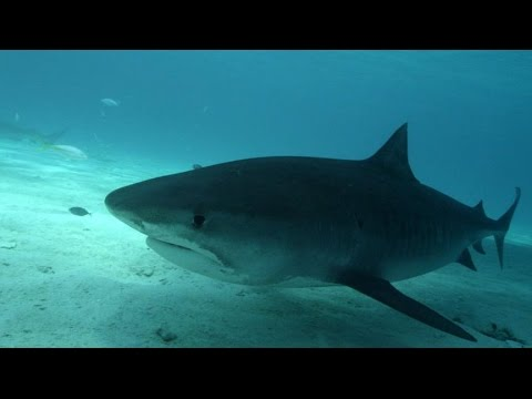 Shark Week 2014: Ginger Zee Swims With Sharks