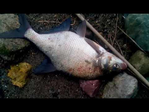 рыбинка рыбалка на леща