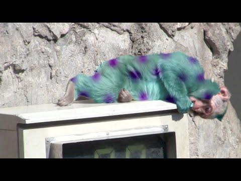 Pretty Baby Monkey video