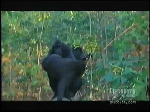 Monkeys mating