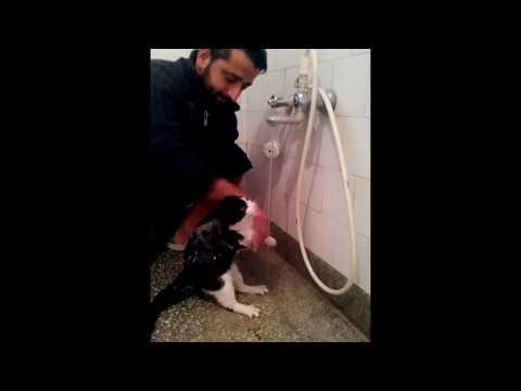 kedi nasıl yıkanır, ustasından öğreniyoruz..