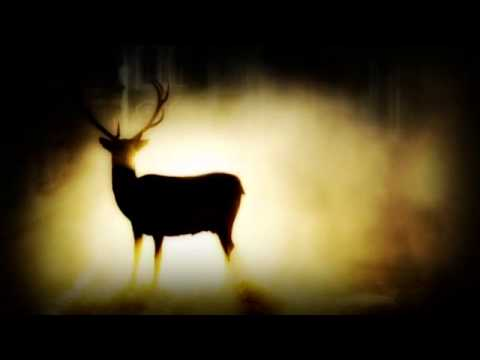 Herb Weidner The Golden Deer