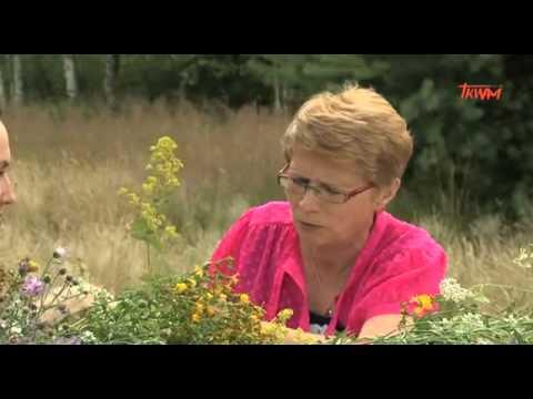 Zioła Na 15 Sierpnia   Drogowskazy Zdrowia   Porady   Odc 21   Sezon I
