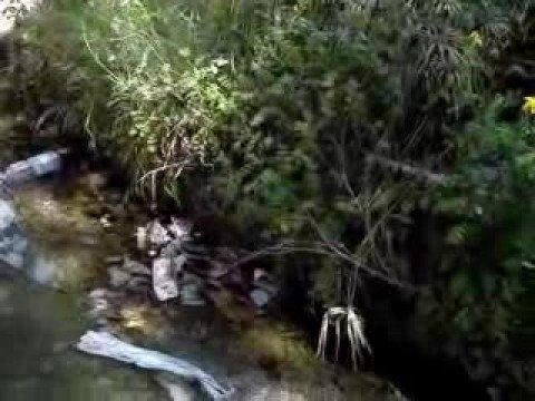 La Fontana dei papiri? Una savana!