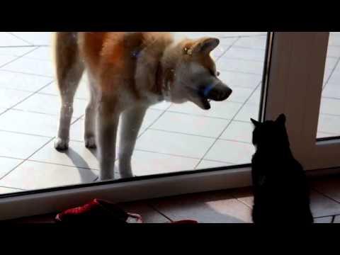 Cat vs Dog FIGHT!!!! Смотреть Прикол! Драка Кошки! Юмор! Прикол! Смех