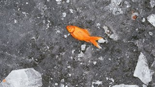 Dead Fish Mystery Solved - Answers News: June 13, 2019