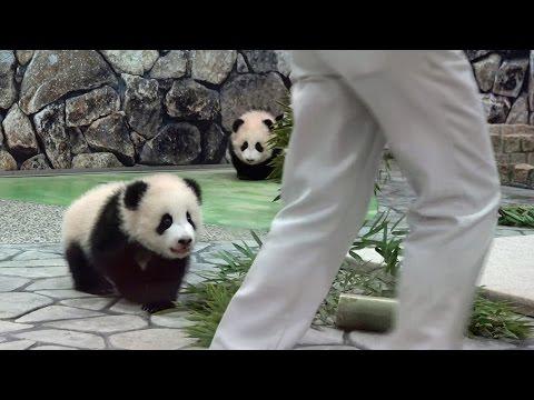 桜浜 桃浜 panda baby run パンダ