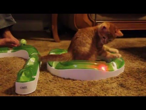 猫のおもちゃ遊びに是非欲しい逸品♪