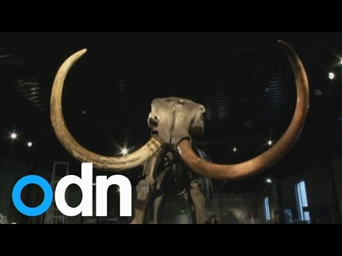 Virtually complete wooly mammoth skeleton sells for £189,000