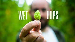 What are wet hops – brewing best bitter with Five Points | The Craft Beer Channel