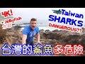 台灣鯊魚多危險?Taiwan Sharks! DANGEROUS! (4K!) - Life in Taiwan #122 MP3