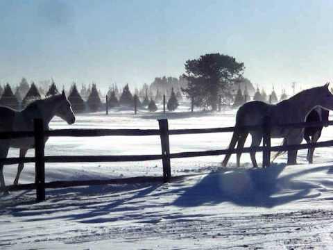 Holmes Family Tree Farm Horses 12-28-10