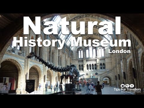 Natural History Museum London: Video Tour (dinosaurs, whales and more!)