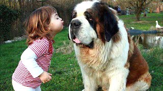 Baby Playing with St Bernard Dog