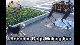 Robotics Dog Making Fun | Funny Dog Videos | Funny Pets