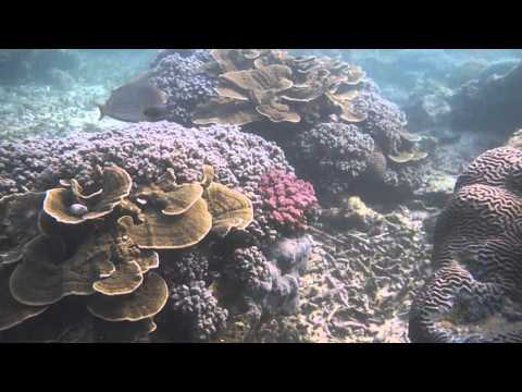 Snorkeling Sadranan Beach Jogja
