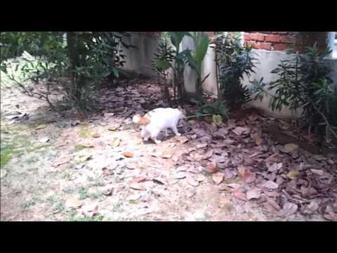 Gefährliche Tiere in Malaysia - der Waran gehört dazu!