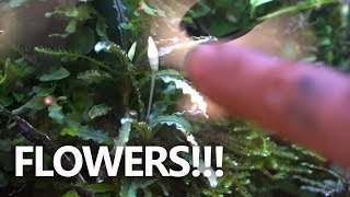 Flowering Plants- In and Out of Water