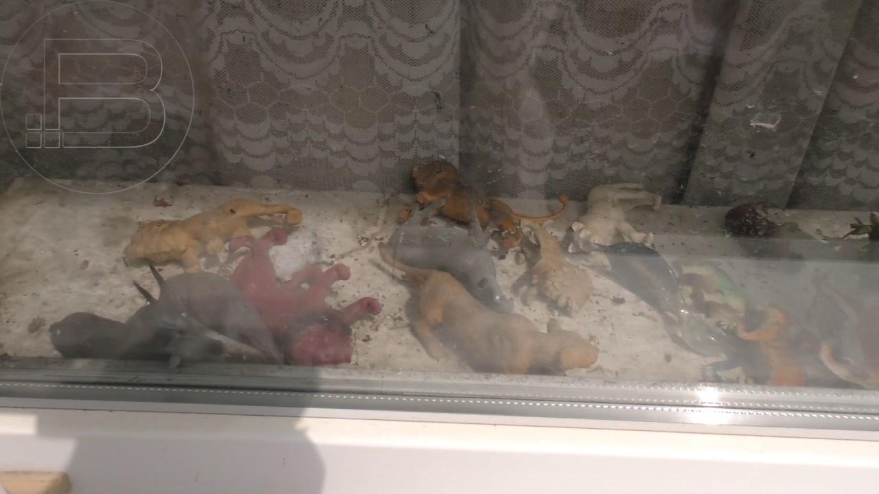 Калушанка, яка крала черепи, утримує у квартирі диких птахів і не має пенсії