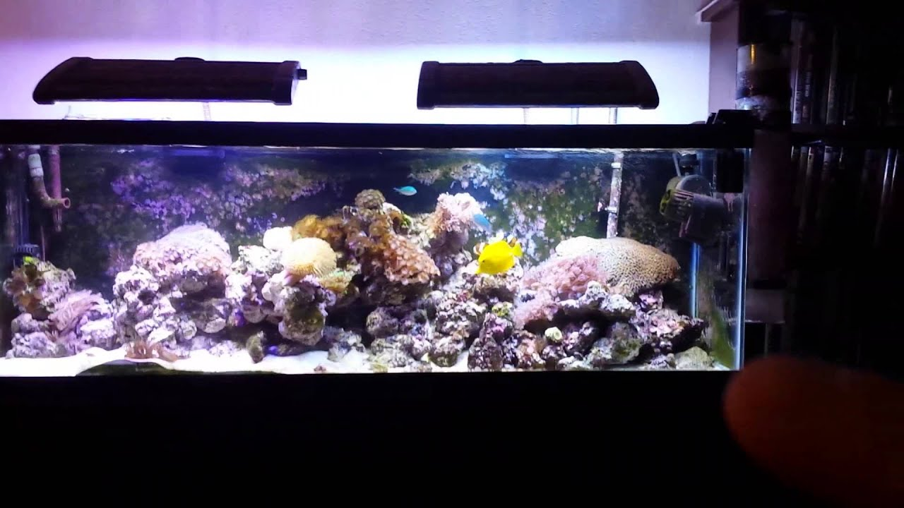 Saltwater fish tank 40 gallon 40 gallon long aquarium for 20 gallon saltwater fish tank