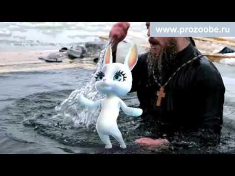 Поздравление с крещением от зайки