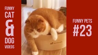Funny Cats and Dogs Compiations 23 | Vines 2018