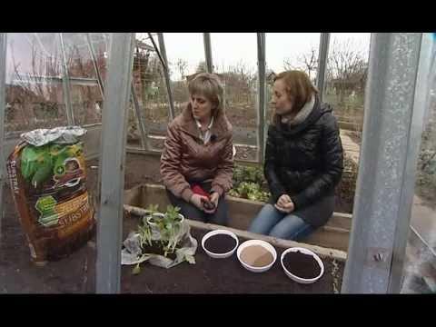 Výsadba zeleniny ve skleníku