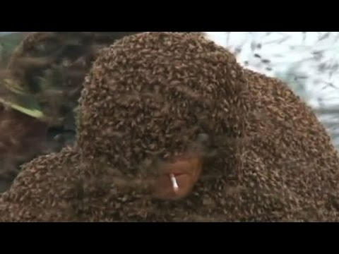 Man covers self with about 1 million bees