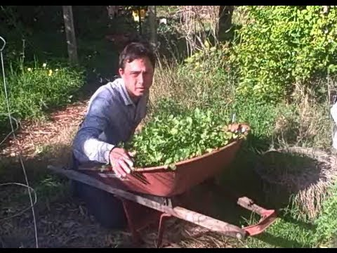 Low Cost Methods to Build a Vegetable Garden Consult and Planning