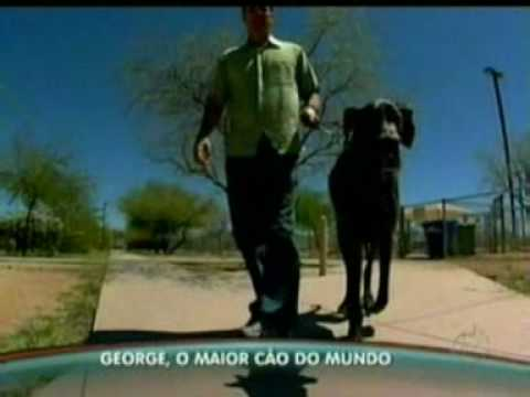 Programa do GUGU - GEORGE o maior CÃO do mundo (por ADRIANA ARAUJO). Music Videos