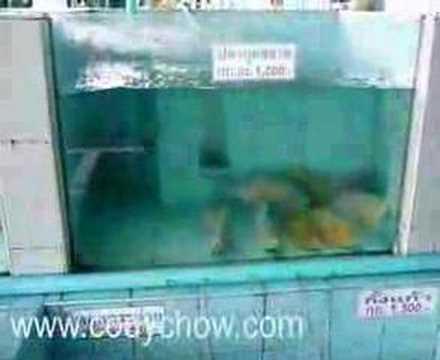 泰國遊-Baan Un Peral食海鮮