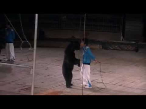 honey badger vs bear. white tiger vs black ear,