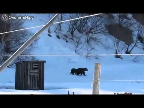 Тётя Зина против медведей ЮМОР ФМ Low)