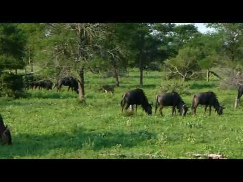 Video Gerco deel 3 A Big Five Kruger ZA.mpg