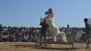 Mega Ashwa show 2017 India horse Dance show 2017