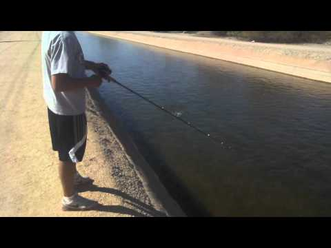 Arizona Fishing for Bass, Catfish and Yellow Bass