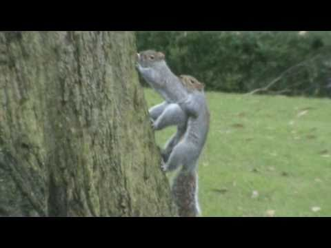 Squirrel Xxx - Nuts To The Tree video