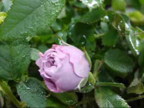 You Belong To My Heart My Garden Sir Cliff Richard