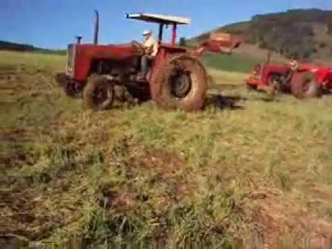 mf 290 e mf 275 aplicando adubo organico no pasto