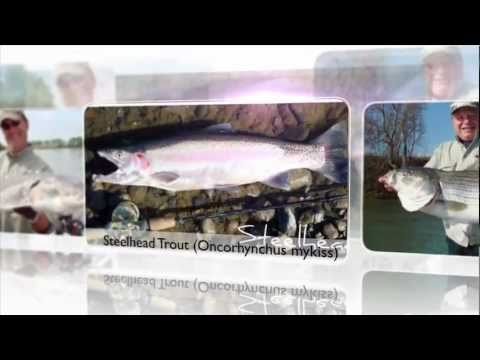 Sacramento River, Feather River, and Yuba River,Feisty Fish Guide Service  www.FeistyFish.net