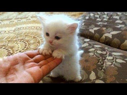 「猫かわいい」 すごくかわいい子猫 - 最も面白い猫の映画 #181