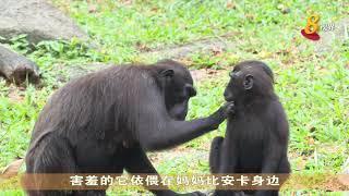 新加坡野生动物园去年共迎来700多个宝宝