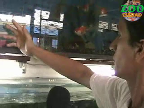 Peces para un acuario(primera parte) - trujilloteve.com