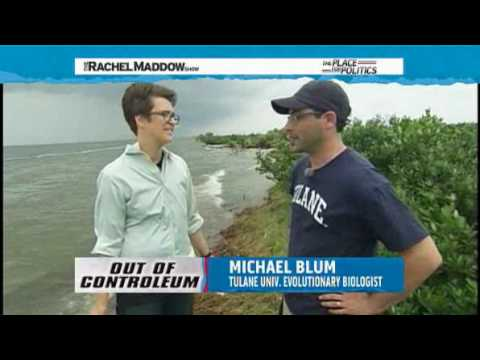BP Oil Spill and Environmental Crisis Rachel Maddow