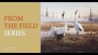 Cranes and Artists – A Creative Dance