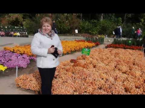 Бал хризантем в Крыму (2016 год)