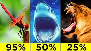 Top 10 Most Efficient Predators In The World