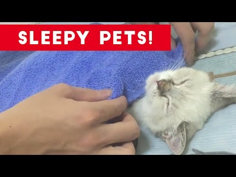 Cutest Sleepy Pet and Animal Videos of 2017 | Funny Pet Videos