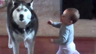 Baby Talks To Dog Who Howls In Response