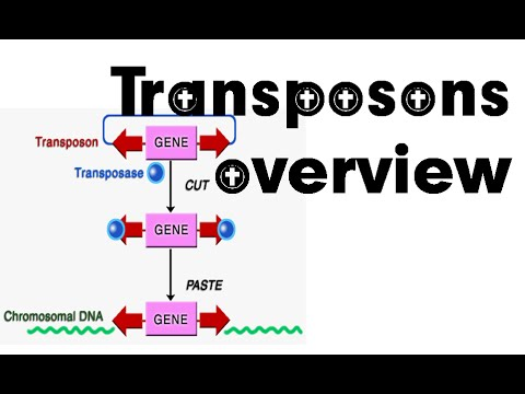 Transposons overview